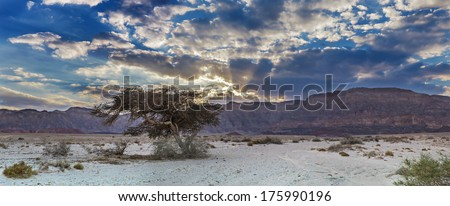 Lonely tree in desert of the Negev, Israel - stock photo