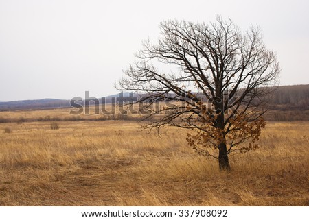 Lonely tree in field, autumn, and bare tree, the tree without leaves, yellow, field, panorama of nature - stock photo