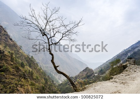 Lonely tree in Himalaya mountains in misty day, Nepal - stock photo