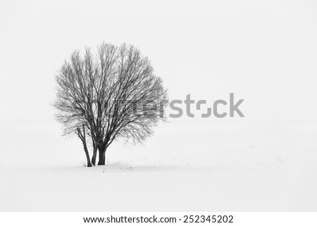 Lonely tree in soft ,snowy and foggy atmosphere in winter time - stock photo