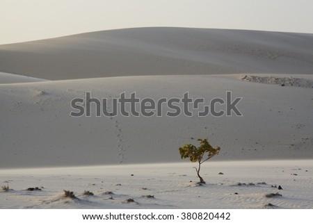 Lonely Tree In The Desert, Vietnam - stock photo