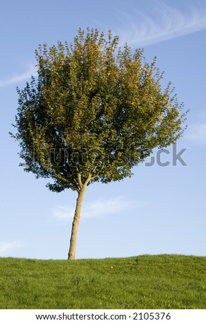 Lonely tree in the field - stock photo