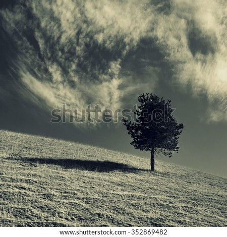 Lonely tree in the field and clouds in the sky, on sepia toning