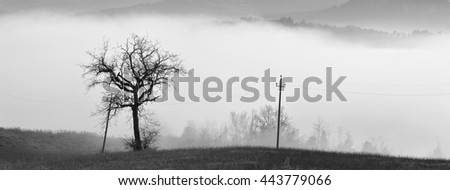 lonely tree in the fog in winter