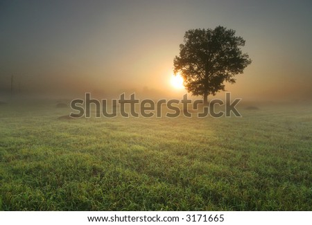 Lonely tree in the middle of field at sunrise - stock photo