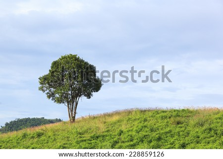 Lonely tree in the top of montain - stock photo