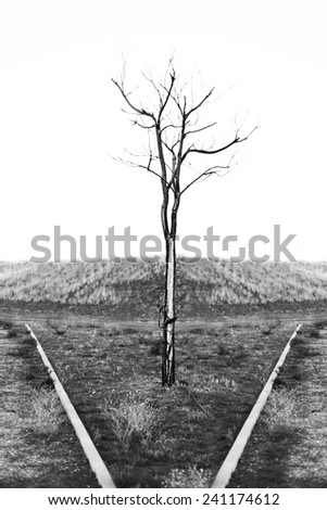 Lonely tree in vertical composition on black and white - stock photo