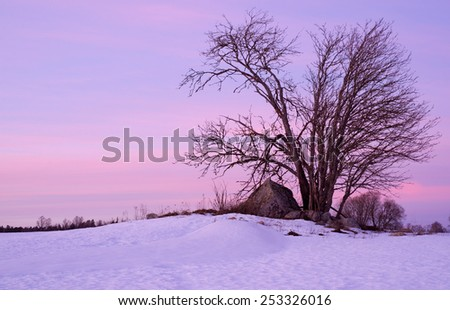 Lonely tree in winter at sunset - stock photo