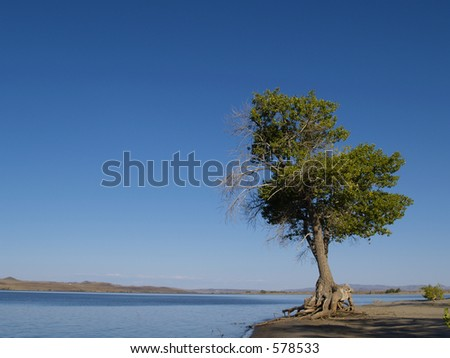 Lonely Tree - Lahontan State Park - Silver Springs, NV - stock photo