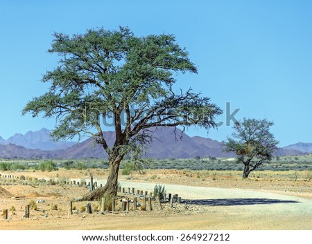 Lonely tree  - Namibia, South-Western Africa - stock photo