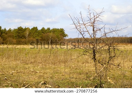 Lonely tree. Nature composition. - stock photo