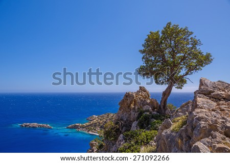 Lonely tree on a background of the sea. Greece, Crete, Loutro - stock photo