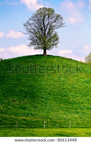 Lonely tree on a green hill - stock photo