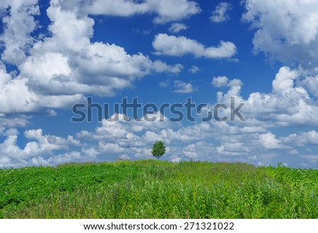 Lonely tree on a green meadow on background of blue sky with white fluffy clouds - stock photo