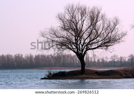 Lonely tree on an island in the river. Landscape. - stock photo