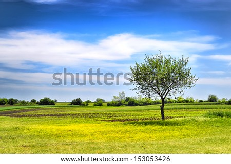 Lonely tree on green meadow against blue cloudy sky - stock photo