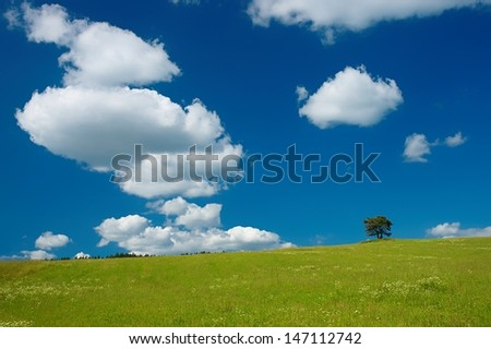 Lonely tree on meadow with sky in background - stock photo