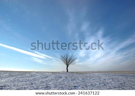 Lonely Tree on Snow Landscape - stock photo