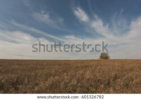 Lonely tree on summer field at sunny day - landscape with meadow and sky