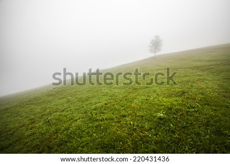 Lonely tree on the hill, above the misty valley in Ukraine - stock photo