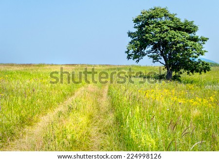 lonely tree on the road of russian isle Putyatin - stock photo