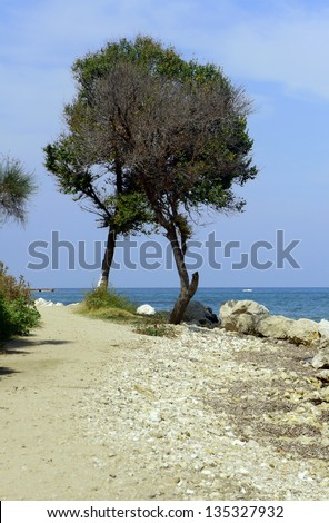 Lonely tree on the shore of the sea, Greece