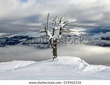 Lonely tree on the snow-covered Alpine slope - Mayrhofen, Austria - stock photo