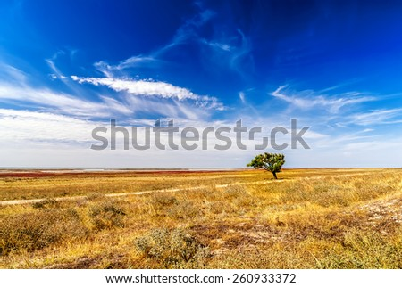 Lonely tree on the yellow field with beautiful sky.