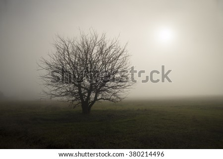 Lonely tree standing in the fog the middle of a field. - stock photo