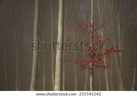 Lonely tree with red leaves