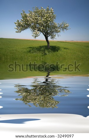 Lonely tree with water reflex during spring - stock photo