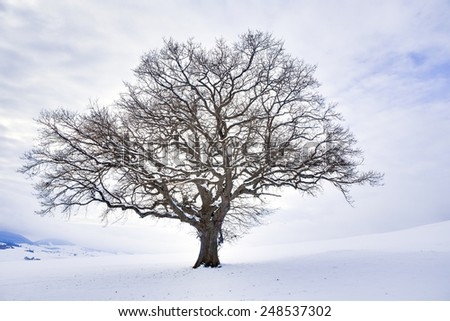 Lonely Winter Tree. Sweet Solitude. Cold and Cloudy day with much snow in the black forest region of Germany - stock photo