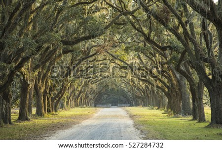 Long avenue of oaks in Savannah, Georgia