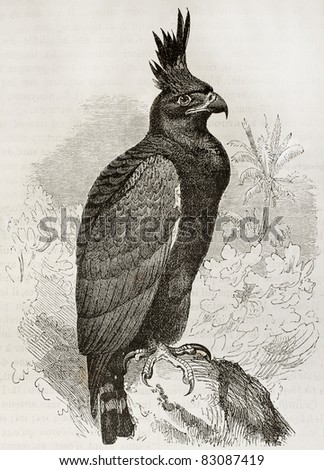 Long Crested Eagle old illustration (Lophaetus occipitalis). Created by Kretschmer and Jahrmargt, published on Merveilles de la Nature, Bailliere et fils, Paris, 1878 - stock photo