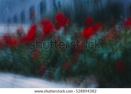 Long exposure causing  motion blur effect of a red rose, flower.