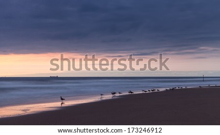 Long exposure photo of seagulls standing on the beach - stock photo