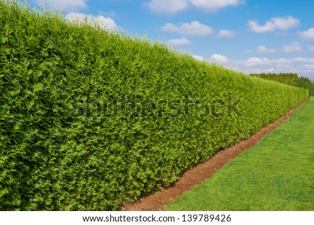 Long green hedge with a lawn and blue sky background - stock photo