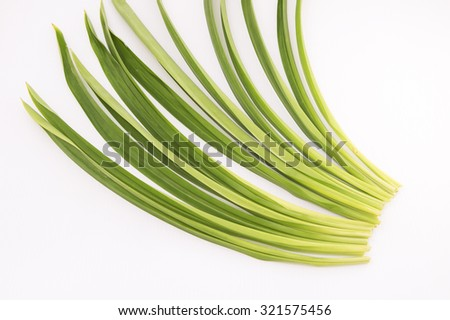 Long green pandan leaf also known as screw pine leaves. Used for culinary and have medicinal benefits for fever, headache, cough and stomach cramp. People in pandan's region used it for repel insects. - stock photo