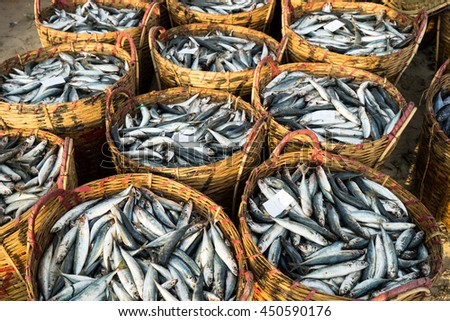 LONG HAI, VIETNAM - 03 JULY 2016: Fresh fish piled up in bamboo baskets at Long Hai fishing port, Ba Ria Vung Tau province