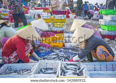 Long Hai, Vietnam - 03 July 2016: The activities of Vietnamese woman in Long Hai fish market, preparing marine fish for the morning market