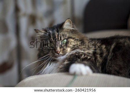 Long hair domestic cat on the sofa - stock photo