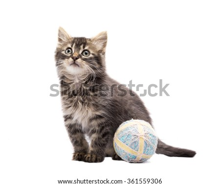Long-Haired Kitten with a Toy Ball Looking up and Sitting on White Background. - stock photo