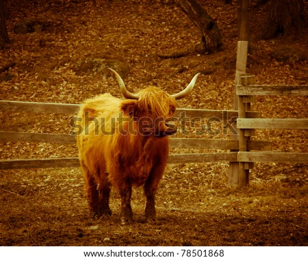 Long horned cow on field - stock photo