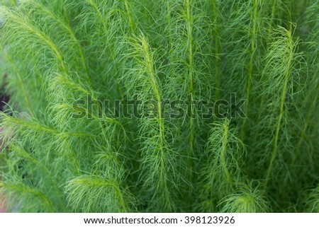 Long leaves in the wind look beautiful and form unique patterns. / Green waves. - stock photo