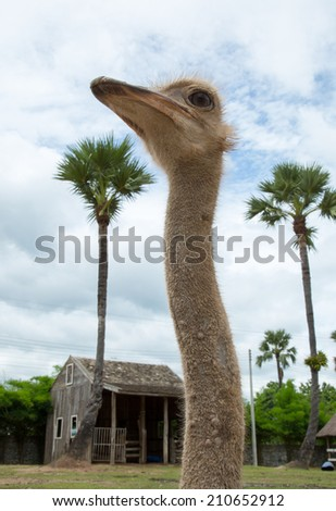 Long neck Emu bird with palm tree and sky background. - stock photo