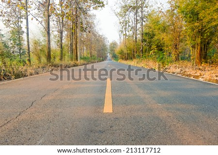 long road in a forest - stock photo