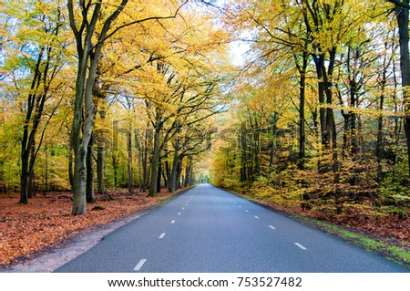Long road in between beautiful trees with color leaves autumn season.