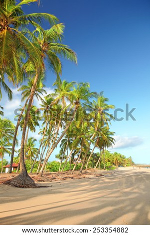 Long shadows of the palm trees stretch along the sandy beach. Rare white clouds floating on the blue sky. A light breeze blowing from the ocean