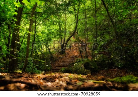 long stairs in the green forest - stock photo