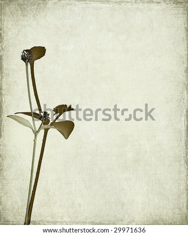 long stem and seed head on grunge background - stock photo